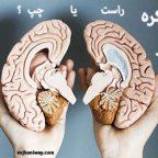 نیمکره مغز